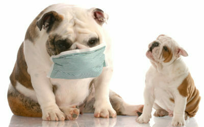 Dog Skin Allergy – How to Deal With Pet Dander in Your Home